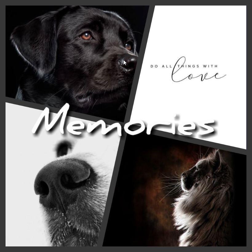 Herinnering aan je dierbare huisdier, persoonlijk en op maat gemaakt!